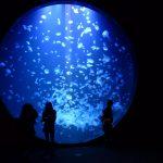 山形クラゲ水族館はどこ?【ドキュメント72時間】場所アクセス料金